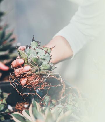 植物のオンラインショップ
