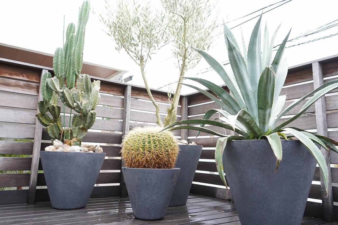 ドライガーデン 鉢植え植栽